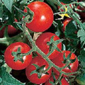 Chadwick Cherry Tomato Seeds
