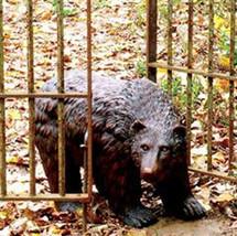 Garden Statuary Bear' w/Rustic Finish