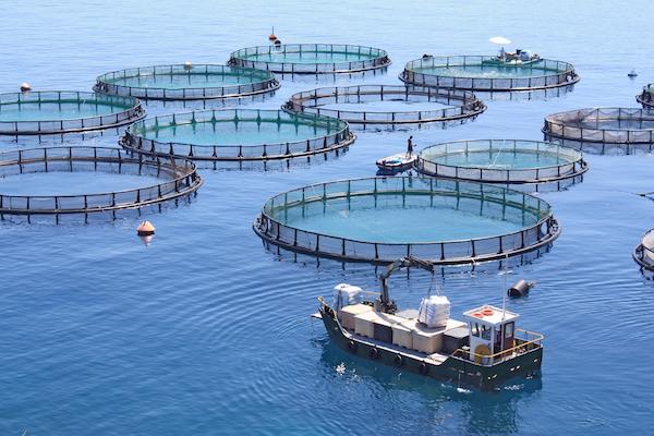 acuicultura-peces-mexico-jaulas.jpg