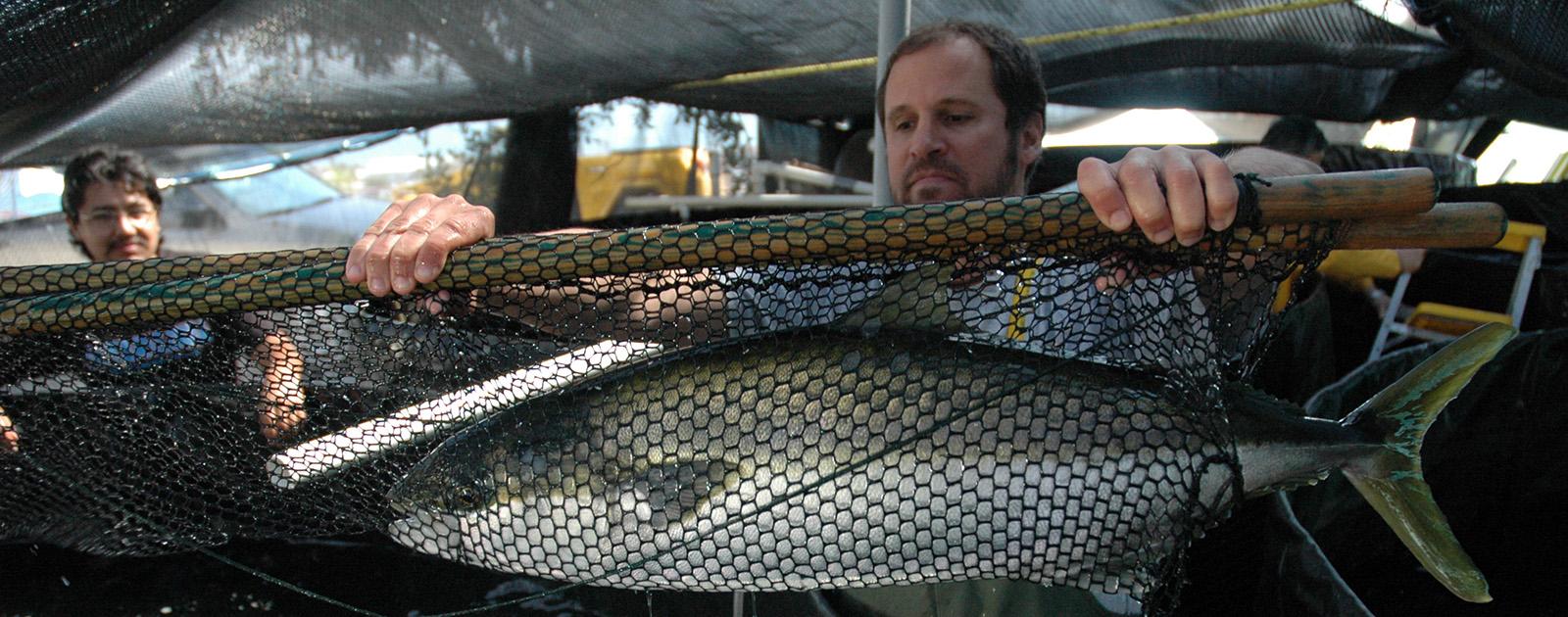 invetigacion-cultivo-peces-cicese-mexico.jpg