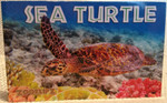 Sea TurtleBook - Flipbook
