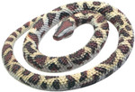 Rock Python Rubber Snake Replica 26""