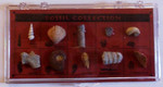 Fossil Collection - 12 Specimens in Clear Case