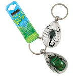 Real Insect Key Rings