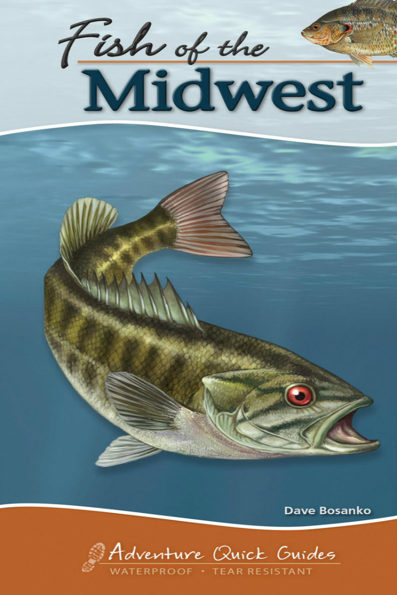 Fish of the midwest quick guide fish identification for Fishing the midwest