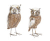 """Set of 2 Decorative Brown and Silver Majestic Owls Standing 7"""" - 31365823"""