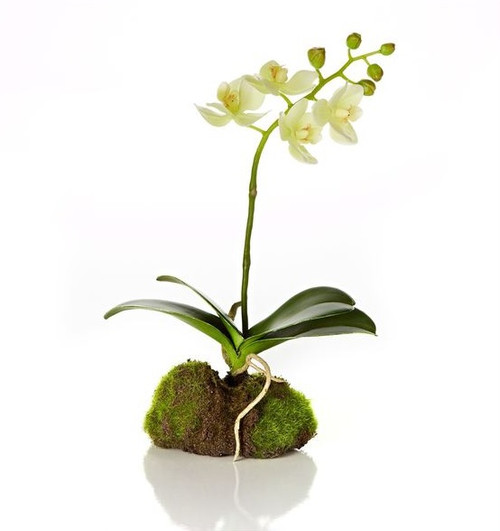 """11.5"""" Decorative Artificial White Silk Phalaenopsis Orchid Flowering Plant - 31517787"""