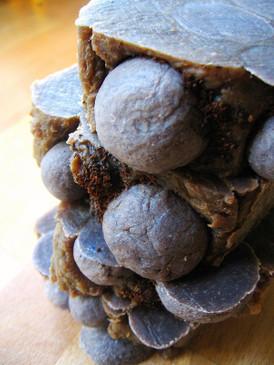 Nekisse Hot Process Soap - Ethiopian Coffee, Blueberry, Buttery Pastry... Coconut-Free, Original Formula
