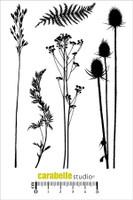 Carabelle A6 Stamps - Dans La Nature, IL Y A...