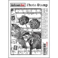 Darkroom Door Cling Stamp, Photo Stamp: Star Flowers