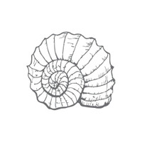 Couture Creations Mini Stamp, Seaside & Me - Fibonacci Shell (1pc)