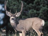 Mule Deer Target