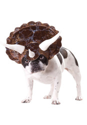 TRICERATOPS dog costume pet animal planet dinosaur hat halloween MEDIUM