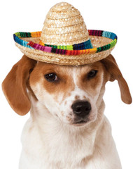 Sombrero Pet Cinco de Mayo dog cat animal halloween costume funny clothes