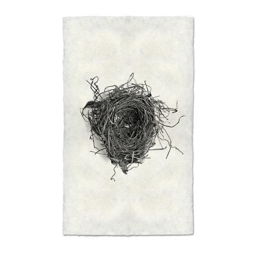 Bird Nest Study Print #5