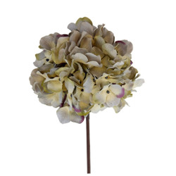 Hydrangea Flower in Ivory with Pale Blue and Purple