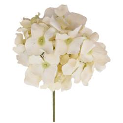 Variegated Long Stem Hydrangea Flowers in Ivory