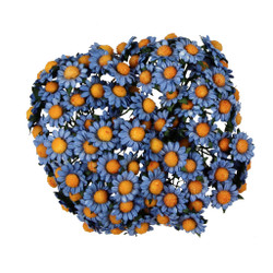 Blue Dainty Daisy Flowers Set of 100