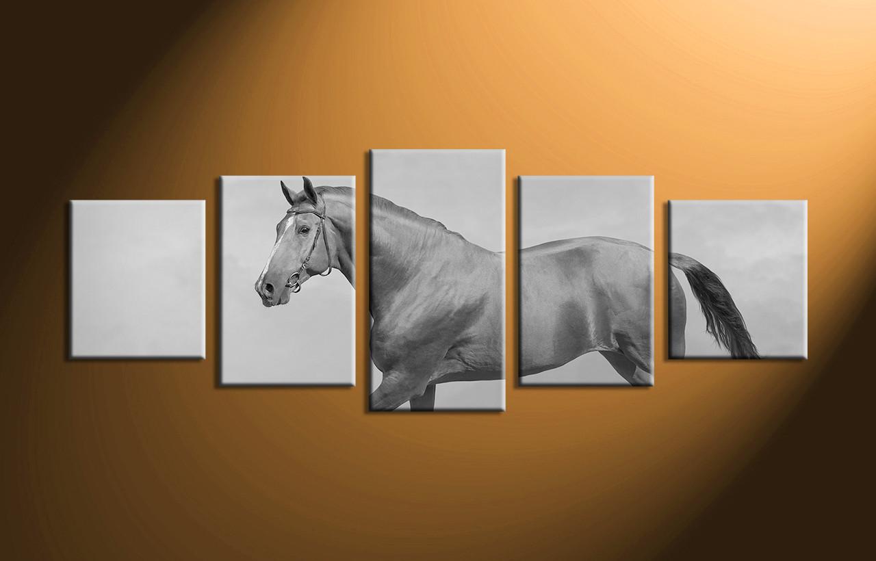 Home Decor, 5 Piece Wall Art, Horse Artwork, Black And White Canvas Art