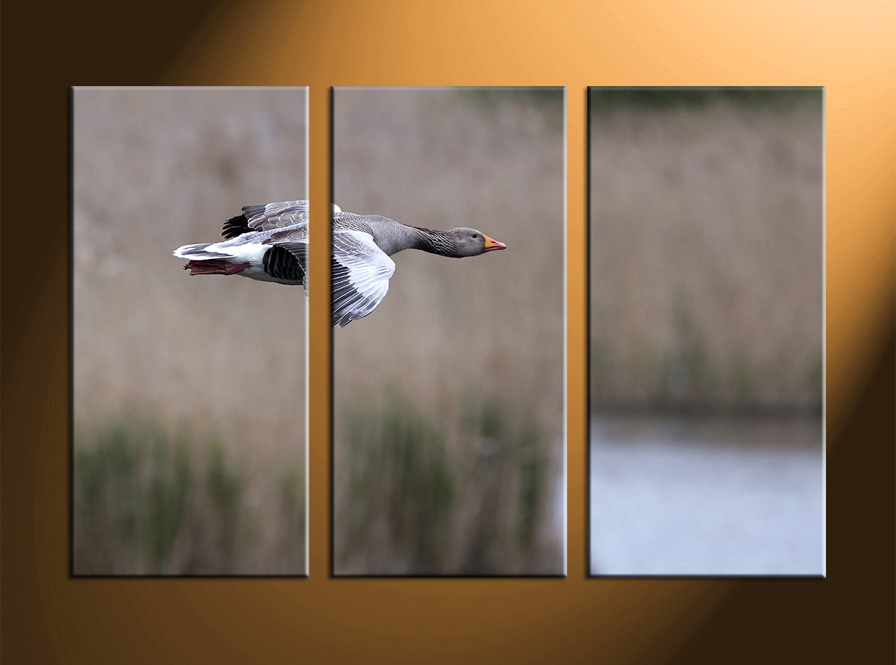 3 piece grey canvas bird wall decor home decor 3 piece canvas art prints wildlife canvas print bird large pictures amipublicfo Image collections