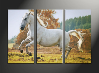 home decor, 3 piece canvas art prints, animal canvas print, horse canvas photography, wildlife art