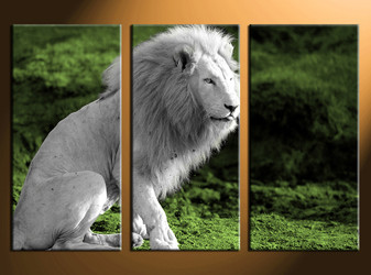 3 piece canvas photography, home decor art, wildlife huge pictures, wildlife wall decor