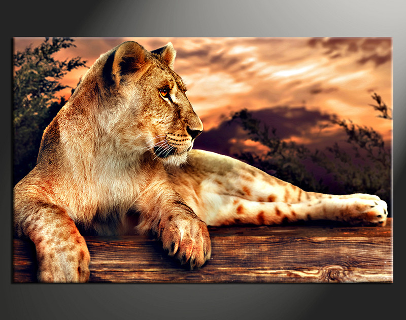 1 Piece Canvas Photography, Home Decor Art, Animal Huge Pictures, Lion  Animal Wall