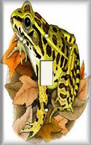 Frog On Leaves - Light Switch Plate Cover
