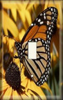 Monarch - Light Switch Plate Cover