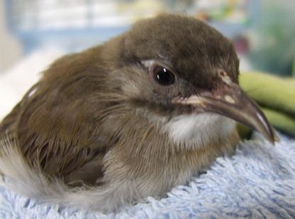 bird-with-deformed-beak.jpg
