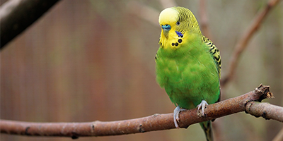 budgie-header-catagories.png
