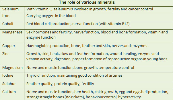 all vitamins and their functions pdf