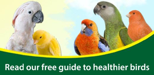 sick-bird-symptoms-guide-web.jpg