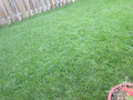 Lawn Grass Cutting/Mowing - Weekly, up to 1,500 sq. ft. 8 WEEKS