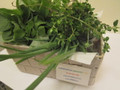 Organic CSA Cariporter 12 Weeks FAMILY (4-5 persons)