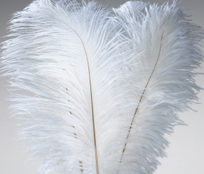 "FEATHERS - OSTRICH WING - WHITE (10-13"") 6 PCS PACKED 12/CS"