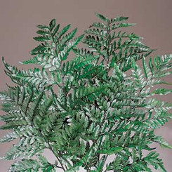 LEATHERLEAF GREEN - 12 BUNCHES