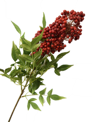 BERRY/LEAF SPRAY - RED - 31""
