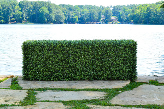 "FAUX BOXWOOD HEDGE - 61 x 22 x 13"" (DS)"