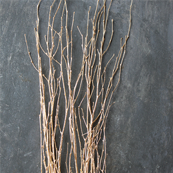 BIRCH BRANCHES - GOLDLEAF - (3-4')