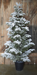 SNOW FLOCKED PINE TREE - MD - 56""
