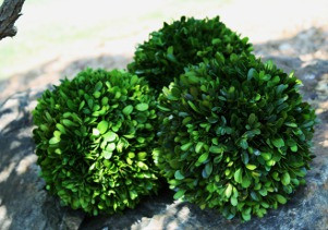 PRESERVED BOXWOOD BALL - 6""