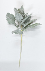 DUSTY MILLER SPRAY - GREEN 17""