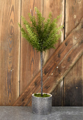 ROSEMARY POT GREEN 23.5""