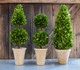 """Shown with  20"""" Double Ball & 24"""" Cone Topiary"""