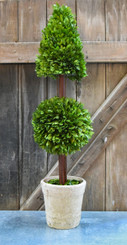 PRESERVED BOXWOOD TOPIARY - MIXED - 36""