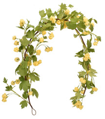 HOPS GARLAND YELLOW 52""