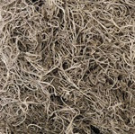 SPANISH MOSS - NATURAL - 1.24 CUBIC FT