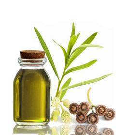 olive-oil-2a.jpg