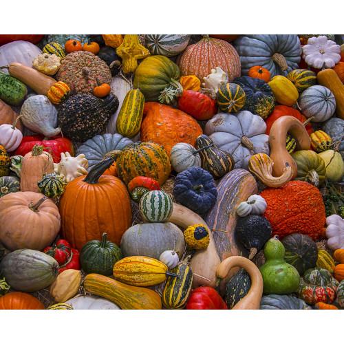 Autumn Harvest 1000 Piece Jigsaw Puzzle